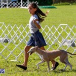 Bermuda Kennel Club BKC Dog Show, October 19, 2013-2