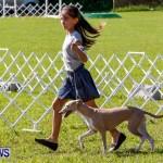 Bermuda Kennel Club BKC Dog Show, October 19, 2013-2