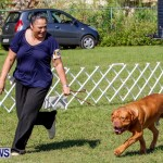 Bermuda Kennel Club BKC Dog Show, October 19, 2013-20