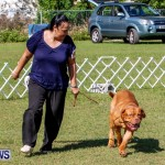 Bermuda Kennel Club BKC Dog Show, October 19, 2013-21