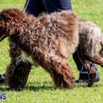 Bermuda Kennel Club BKC Dog Show, October 19, 2013-24