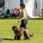 Bermuda Kennel Club BKC Dog Show, October 19, 2013-25