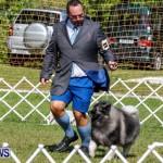 Bermuda Kennel Club BKC Dog Show, October 19, 2013-27