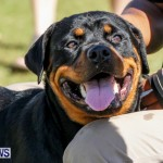 Bermuda Kennel Club BKC Dog Show, October 19, 2013-28