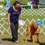Bermuda Kennel Club BKC Dog Show, October 19, 2013-30