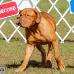 Bermuda Kennel Club BKC Dog Show, October 19, 2013-31