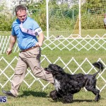 Bermuda Kennel Club BKC Dog Show, October 19, 2013-34