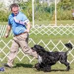 Bermuda Kennel Club BKC Dog Show, October 19, 2013-34