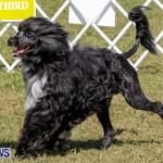 Bermuda Kennel Club BKC Dog Show, October 19, 2013-36