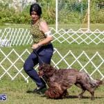 Bermuda Kennel Club BKC Dog Show, October 19, 2013-38