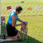 Bermuda Kennel Club BKC Dog Show, October 19, 2013-4