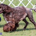 Bermuda Kennel Club BKC Dog Show, October 19, 2013-40