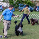 Bermuda Kennel Club BKC Dog Show, October 19, 2013-41
