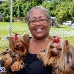 Bermuda Kennel Club BKC Dog Show, October 19, 2013-48