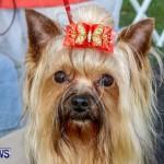 Bermuda Kennel Club BKC Dog Show, October 19, 2013-49