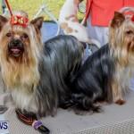 Bermuda Kennel Club BKC Dog Show, October 19, 2013-51