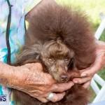 Bermuda Kennel Club BKC Dog Show, October 19, 2013-53