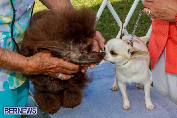 Bermuda Kennel Club BKC Dog Show, October 19, 2013-54