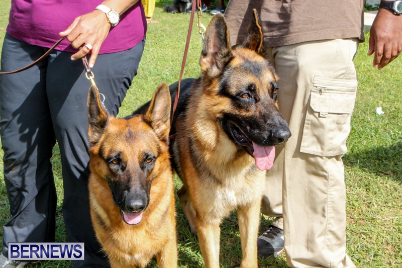 Bermuda-Kennel-Club-BKC-Dog-Show-October-19-2013-58