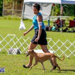 Bermuda Kennel Club BKC Dog Show, October 19, 2013-6