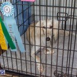 Bermuda Kennel Club BKC Dog Show, October 19, 2013-69