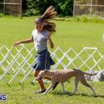 Bermuda Kennel Club BKC Dog Show, October 19, 2013-7