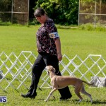 Bermuda Kennel Club BKC Dog Show, October 19, 2013-8