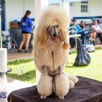Bermuda Kennel Club BKC Dog Show, October 19, 2013-80