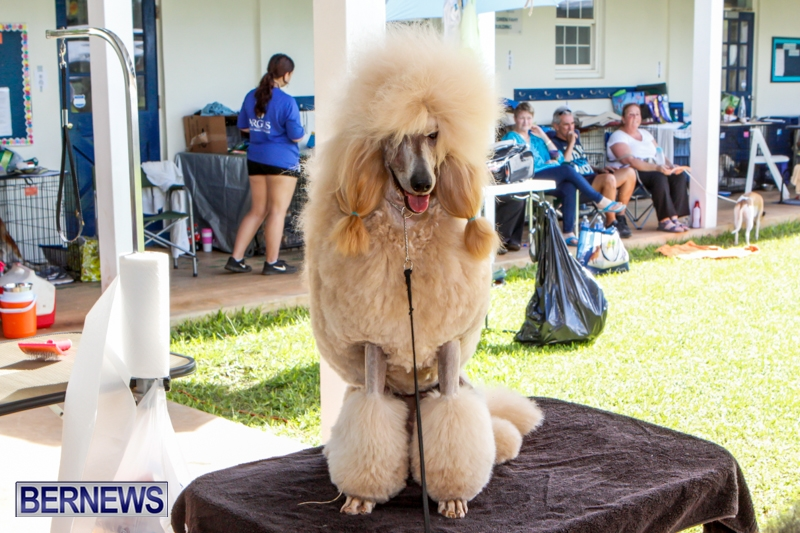 Bermuda-Kennel-Club-BKC-Dog-Show-October-19-2013-80
