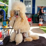 Bermuda Kennel Club BKC Dog Show, October 19, 2013-83