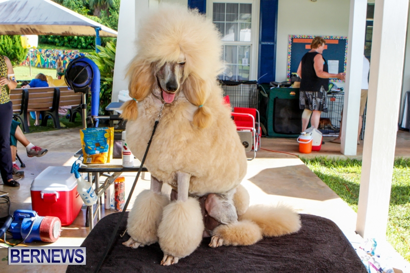 Bermuda-Kennel-Club-BKC-Dog-Show-October-19-2013-83