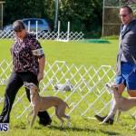 Bermuda Kennel Club BKC Dog Show, October 19, 2013-9