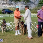 Bermuda Kennel Club BKC Dog Show, October 19, 2013-90