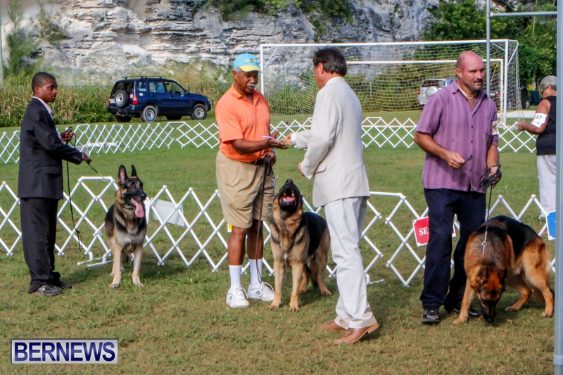 Bermuda-Kennel-Club-BKC-Dog-Show-October-19-2013-90