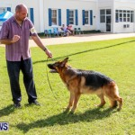 Bermuda Kennel Club BKC Dog Show, October 19, 2013-91