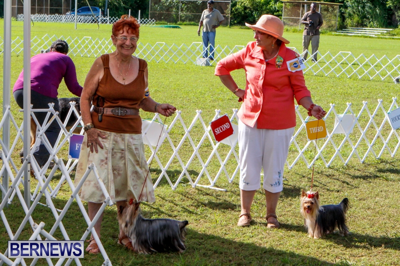 Bermuda-Kennel-Club-BKC-Dog-Show-October-19-2013-94