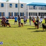 Bermuda Kennel Club BKC Dog Show, October 19, 2013-95