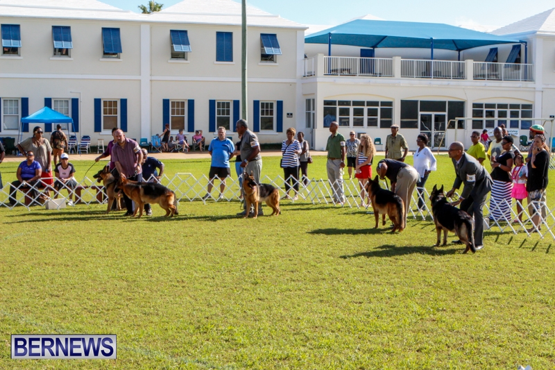 Bermuda-Kennel-Club-BKC-Dog-Show-October-19-2013-95