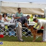 Bermuda Kennel Club BKC Dog Show, October 19, 2013-96