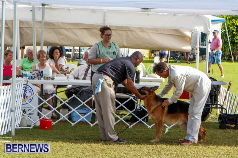 Bermuda-Kennel-Club-BKC-Dog-Show-October-19-2013-96