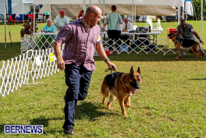 Bermuda-Kennel-Club-BKC-Dog-Show-October-19-2013-97