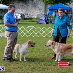 Bermuda Kennel Club BKC Dog Show, October 19, 2013-99
