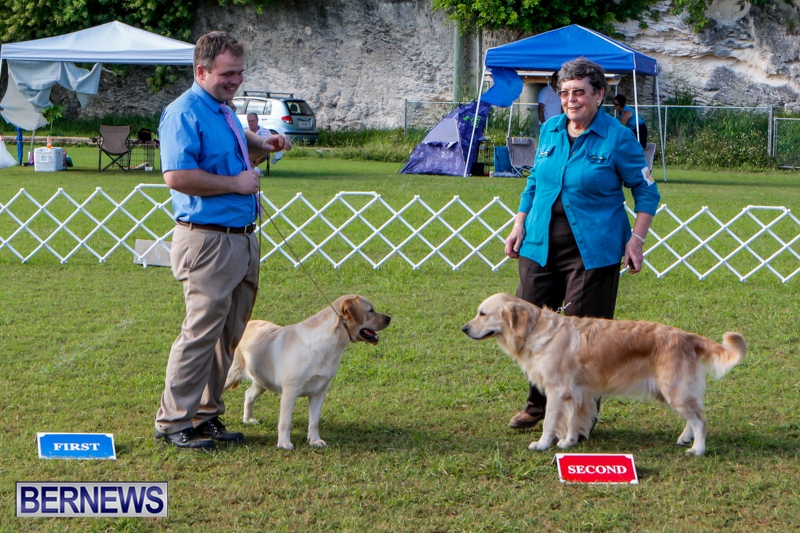 Bermuda-Kennel-Club-BKC-Dog-Show-October-19-2013-99