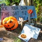Halloween Pumpkin Picking Festival Bermuda, October 24, 2013-5
