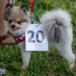 SPCA Fun Fair Bermuda, October 12, 2013-20