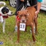 SPCA Fun Fair Bermuda, October 12, 2013-27