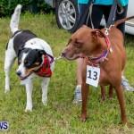 SPCA Fun Fair Bermuda, October 12, 2013-28