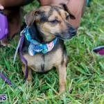 SPCA Fun Fair Bermuda, October 12, 2013-35