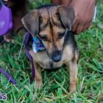 SPCA Fun Fair Bermuda, October 12, 2013-36