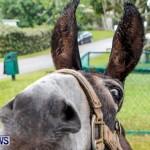 SPCA Fun Fair Bermuda, October 12, 2013-67